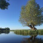 Alphense Kanovereniging nieuwsbrief-juni